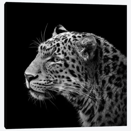 Leopard In Black & White I Canvas Print #LUK11} by Lukas Holas Canvas Art Print