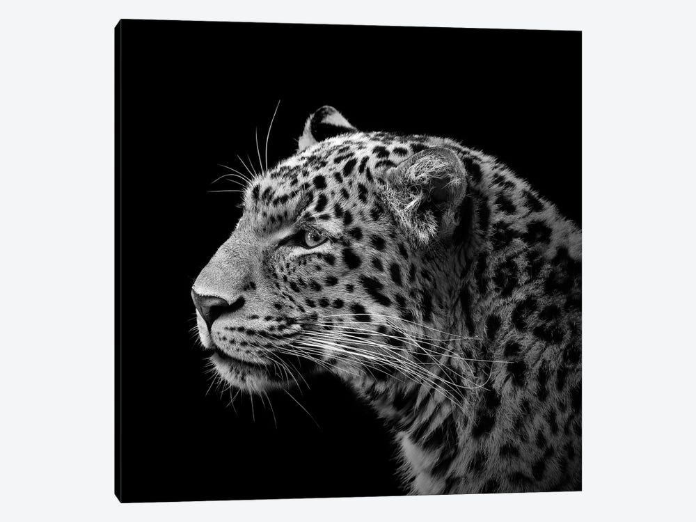 Leopard In Black & White I by Lukas Holas 1-piece Art Print