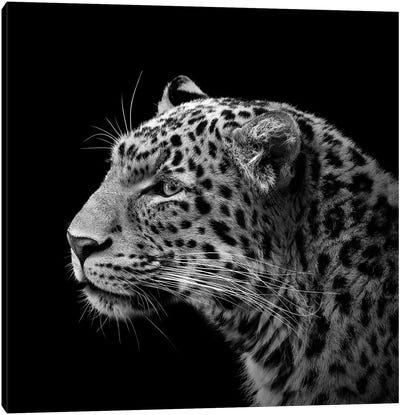 Leopard In Black & White I Canvas Art Print