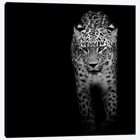Leopard In Black & White II Canvas Print #LUK12} by Lukas Holas Canvas Print
