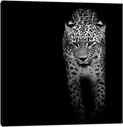Leopard In Black & White II Canvas Art Print