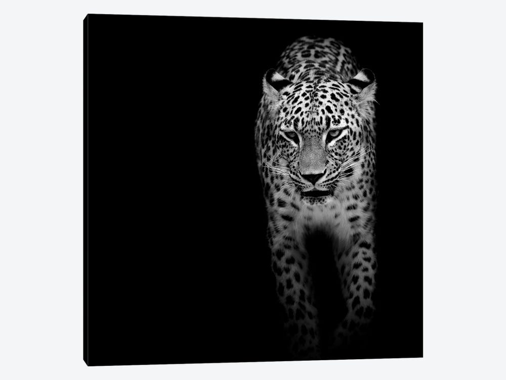 Leopard In Black & White II by Lukas Holas 1-piece Canvas Artwork