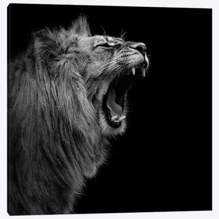 Lion In Black & White I Canvas Print #LUK13} by Lukas Holas Canvas Art Print