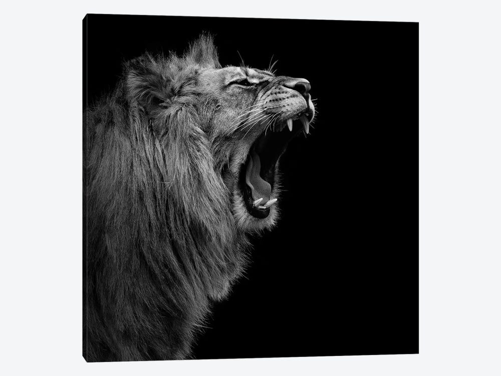 Lion In Black & White I 1-piece Art Print