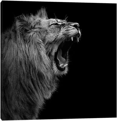 Lion In Black & White I Canvas Art Print