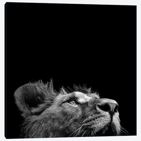 Lion In Black & White II Canvas Print #LUK14} by Lukas Holas Canvas Wall Art