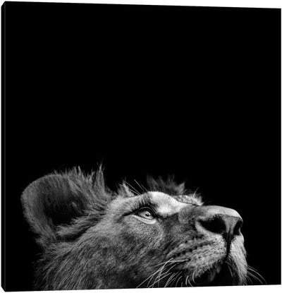 Lion In Black & White II Canvas Art Print