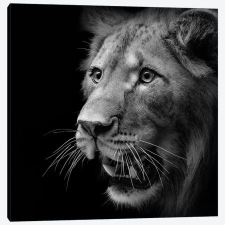 Lion In Black & White III Canvas Print #LUK15} by Lukas Holas Canvas Art
