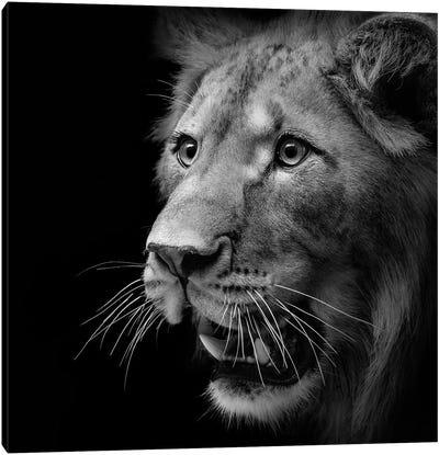 Lion In Black & White III Canvas Art Print