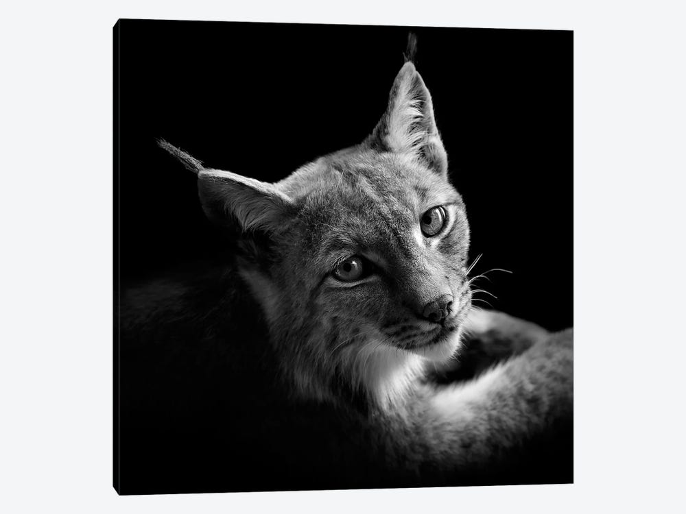 Lynx In Black & White II by Lukas Holas 1-piece Canvas Art