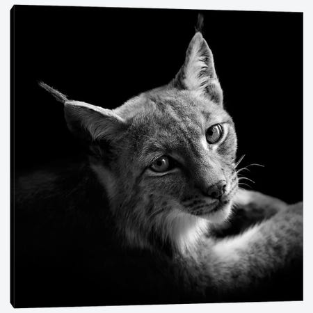Lynx In Black & White II Canvas Print #LUK18} by Lukas Holas Canvas Print
