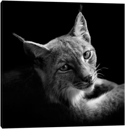 Lynx In Black & White II Canvas Art Print