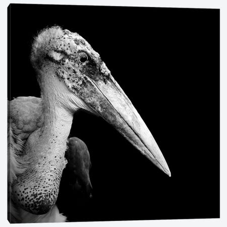 Marabou Stork In Black & White Canvas Print #LUK19} by Lukas Holas Canvas Art Print