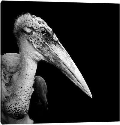 Marabou Stork In Black & White Canvas Art Print
