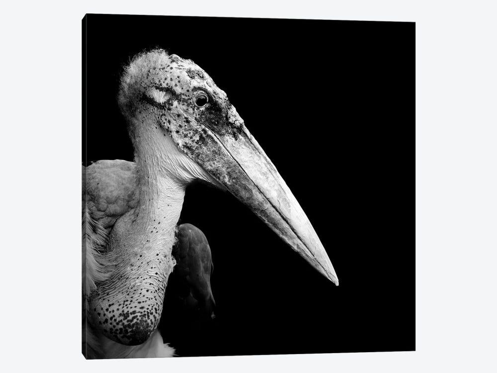 Marabou Stork In Black & White by Lukas Holas 1-piece Art Print