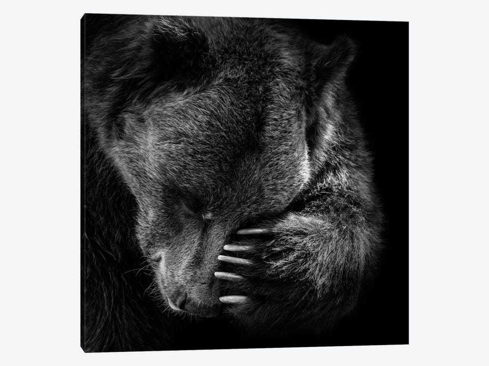Bear In Black & White I by Lukas Holas 1-piece Canvas Art Print