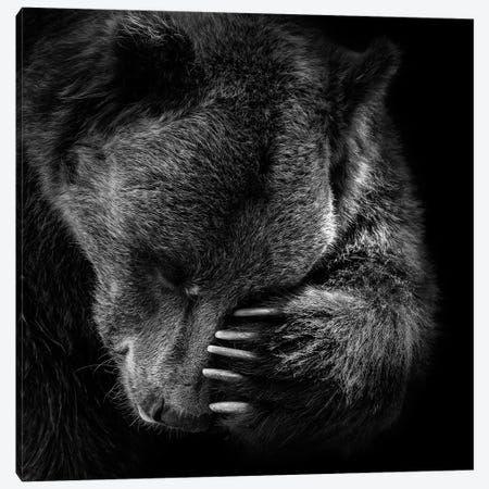 Bear In Black & White I 3-Piece Canvas #LUK1} by Lukas Holas Canvas Print