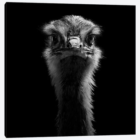 Ostrich In Black & White Canvas Print #LUK20} by Lukas Holas Canvas Wall Art