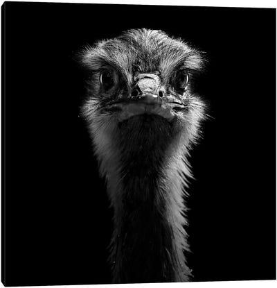Ostrich In Black & White Canvas Art Print