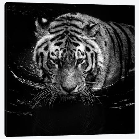 Tiger In Water, Black & White Canvas Print #LUK22} by Lukas Holas Canvas Art