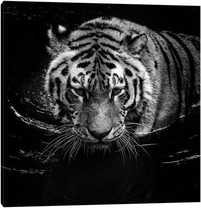 Tiger In Water, Black & White Canvas Art Print