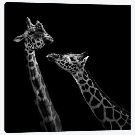 Two Giraffes In Black & White Canvas Print #LUK24} by Lukas Holas Canvas Art Print