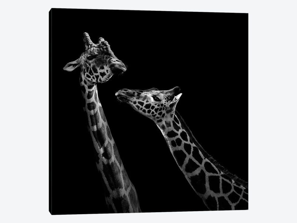 Two Giraffes In Black & White by Lukas Holas 1-piece Art Print