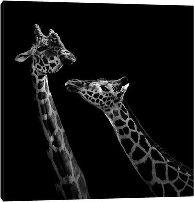 Two Giraffes In Black & White Canvas Art Print