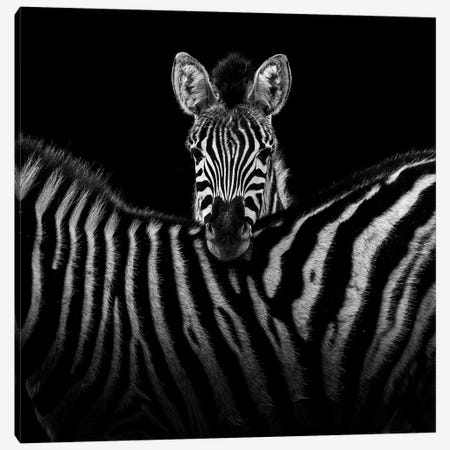 Two Zebras In Black & White I Canvas Print #LUK25} by Lukas Holas Canvas Art Print