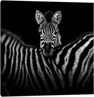 Two Zebras In Black & White I Canvas Art Print