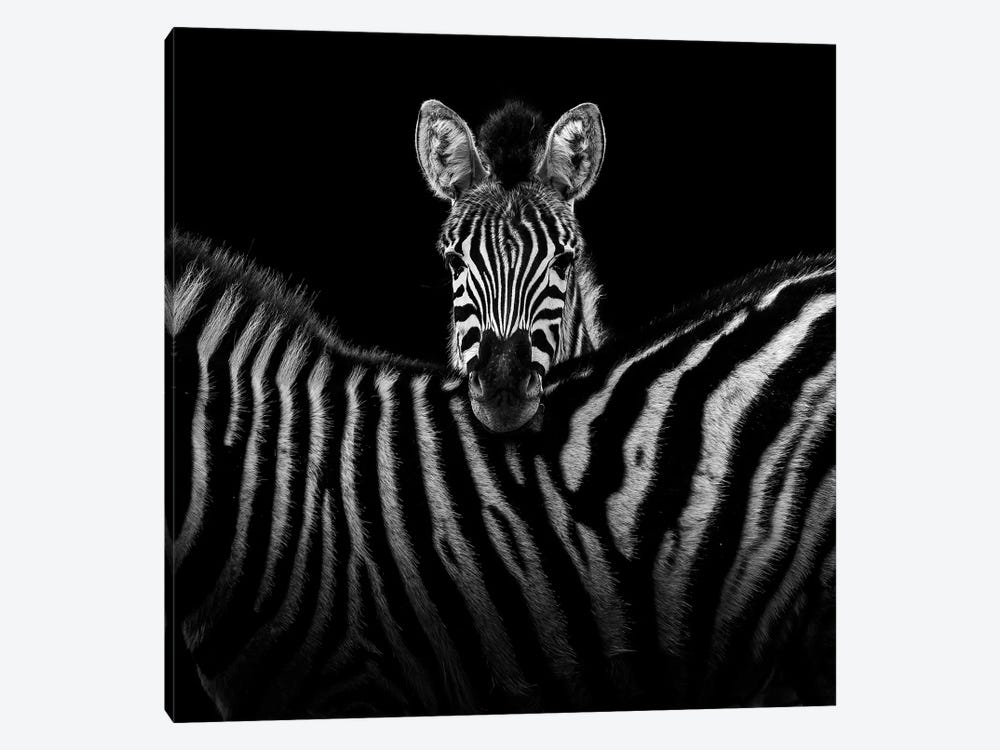 Two Zebras In Black & White I by Lukas Holas 1-piece Canvas Wall Art