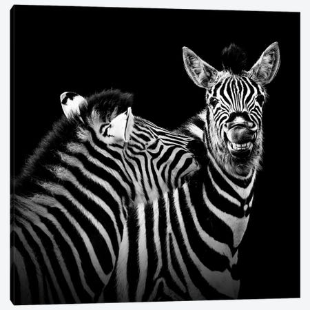 Two Zebras In Black & White II Canvas Print #LUK26} by Lukas Holas Art Print