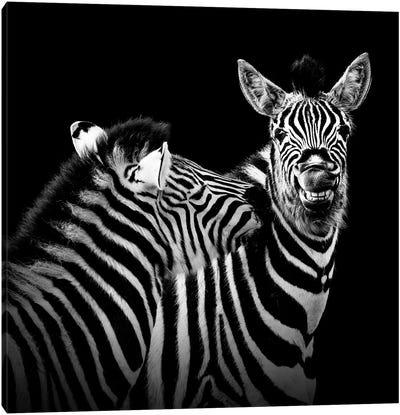 Two Zebras In Black & White II Canvas Art Print