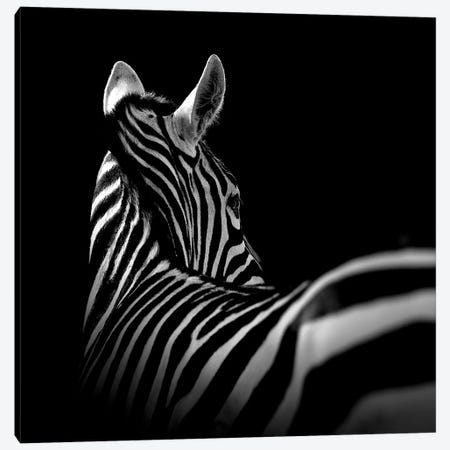 Zebra In Black & White I Canvas Print #LUK27} by Lukas Holas Canvas Print