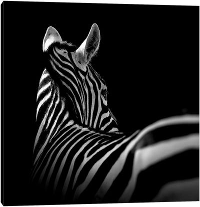 Zebra In Black & White I Canvas Art Print