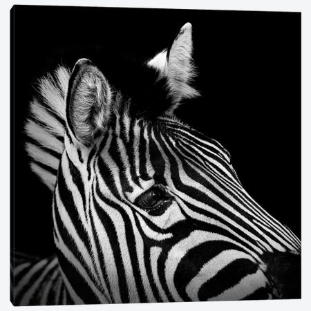 Zebra In Black & White II Canvas Print #LUK28} by Lukas Holas Canvas Wall Art