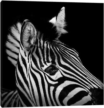 Zebra In Black & White II Canvas Art Print