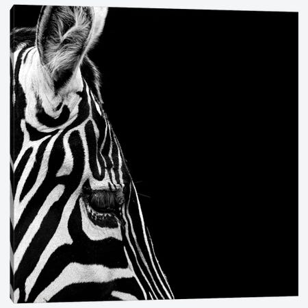 Zebra In Black & White III Canvas Print #LUK29} by Lukas Holas Canvas Artwork