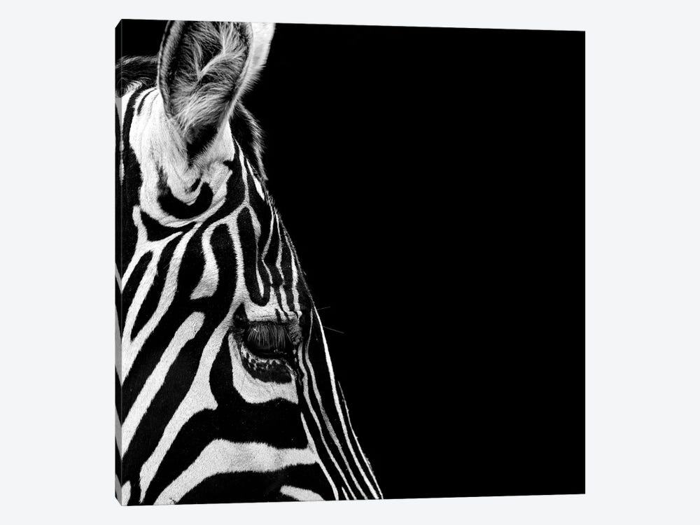 Zebra In Black & White III by Lukas Holas 1-piece Canvas Art