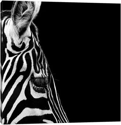 Zebra In Black & White III Canvas Art Print