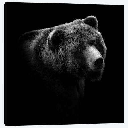 Bear In Black & White II Canvas Print #LUK2} by Lukas Holas Canvas Art Print