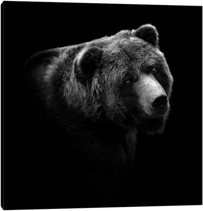 Bear In Black & White II Canvas Art Print