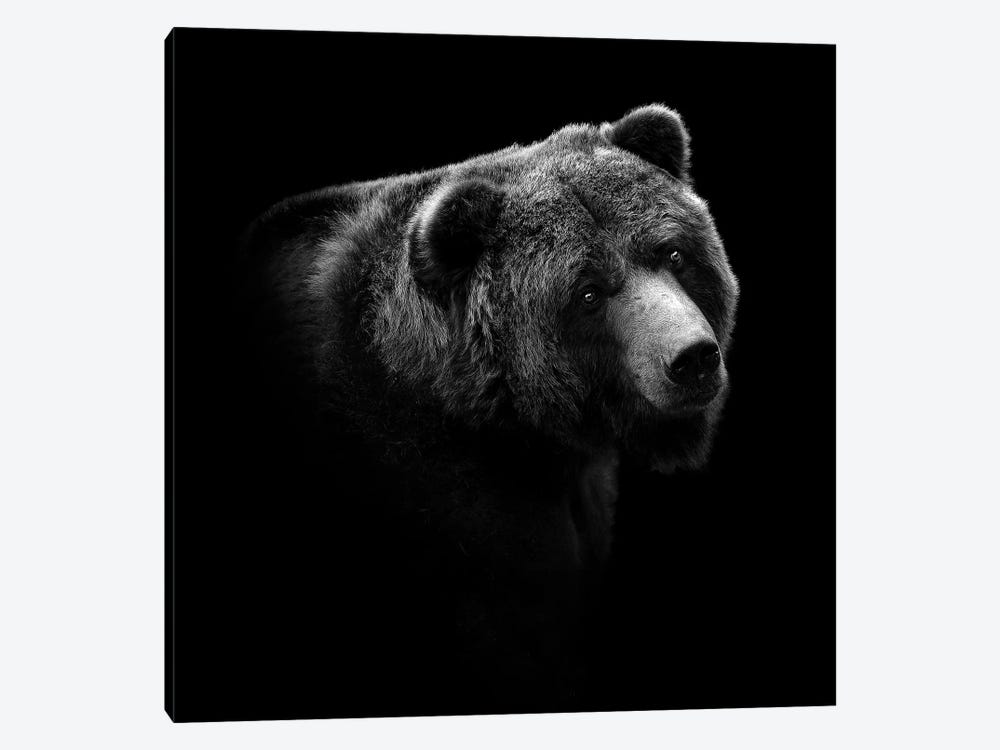 Bear In Black & White II by Lukas Holas 1-piece Canvas Wall Art