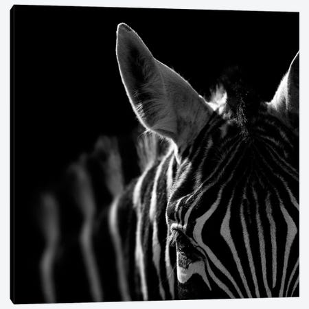 Zebra In Black & White IV Canvas Print #LUK30} by Lukas Holas Canvas Art Print