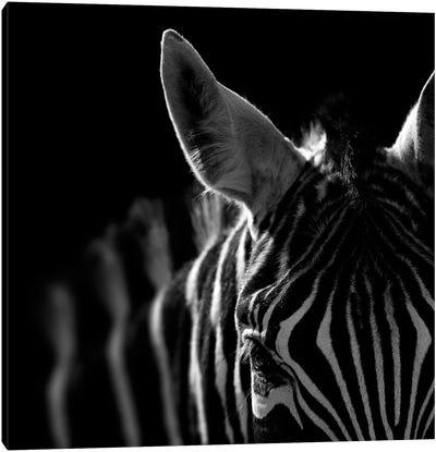 Zebra In Black & White IV Canvas Art Print
