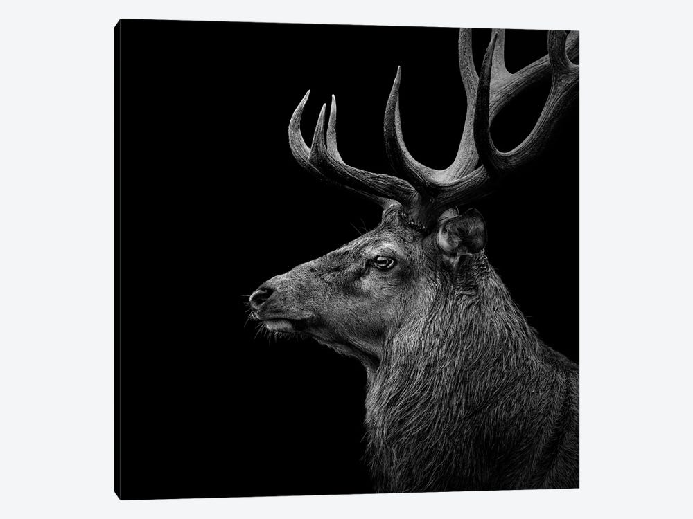 Deer In Black & White by Lukas Holas 1-piece Canvas Art