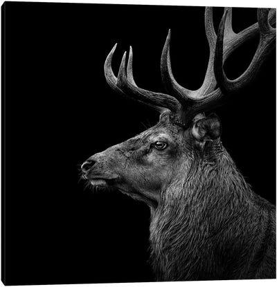 Deer In Black & White Canvas Art Print