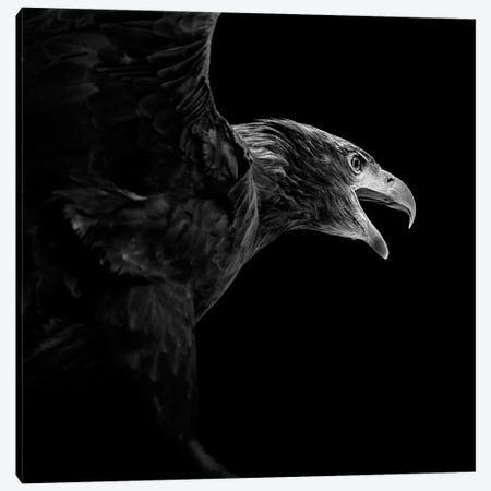 Eagle In Black & White 3-Piece Canvas #LUK5} by Lukas Holas Canvas Art
