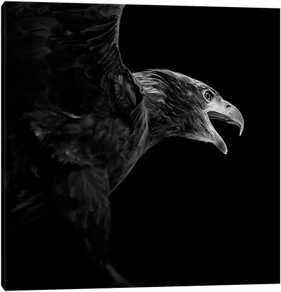 Eagle In Black & White Canvas Art Print