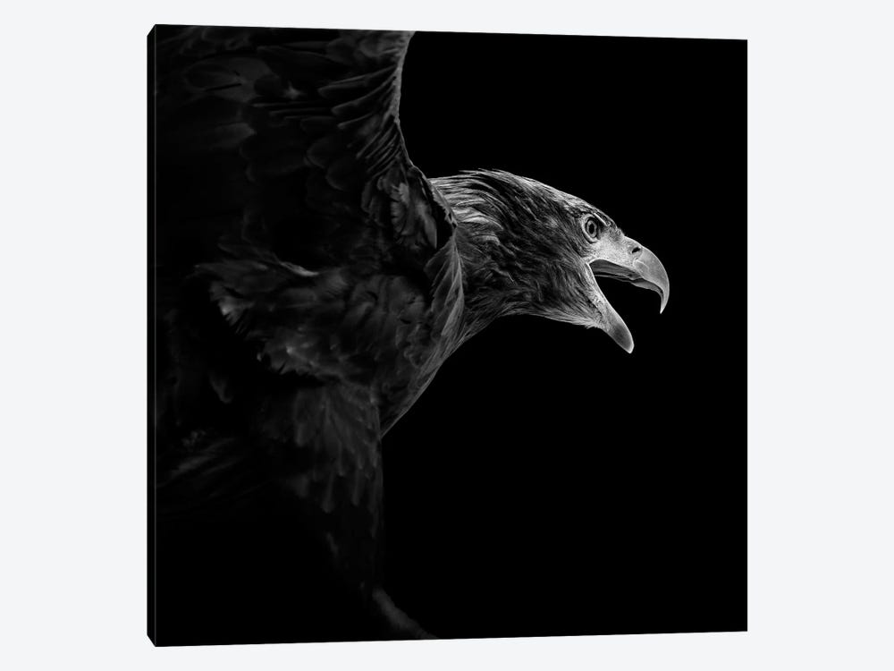 Eagle In Black & White by Lukas Holas 1-piece Canvas Art Print